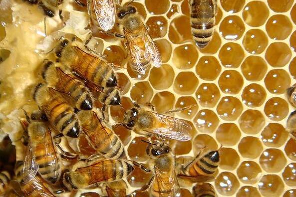 怎么区分成熟蜂蜜、未成熟蜂蜜