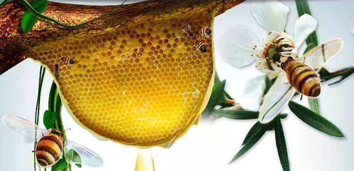 蜂蜜的营养成分说明