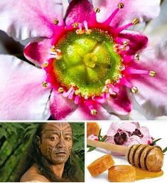 TAku蜂蜜——麦卢卡花