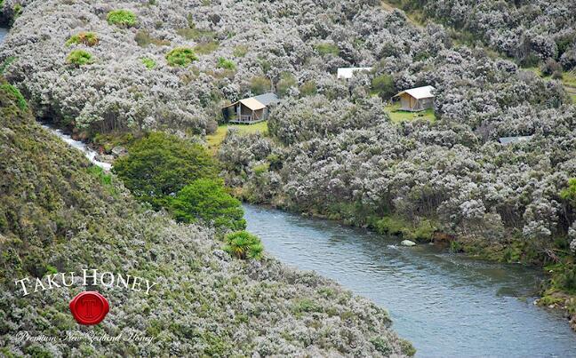 新西兰麦卢卡花树