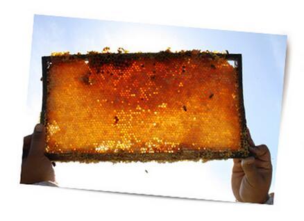 麦卢卡蜂蜜蜂胶和蜂蜜
