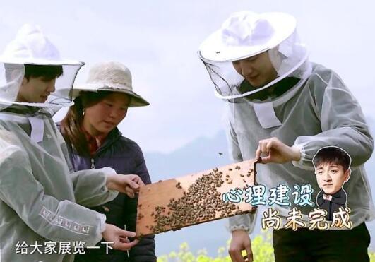 《哈哈农夫》中王源、杨超越、金瀚变身蜂农取蜜