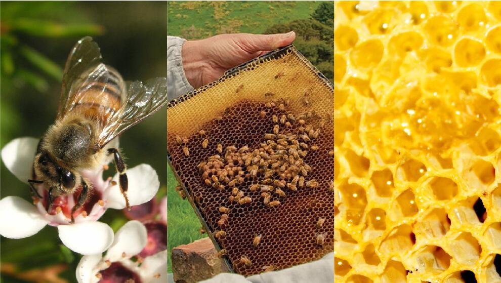 卡瑞蜂蜜5+蜂巢蜜