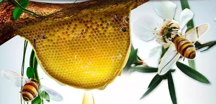 kare蜂巢蜜中的蜂巢
