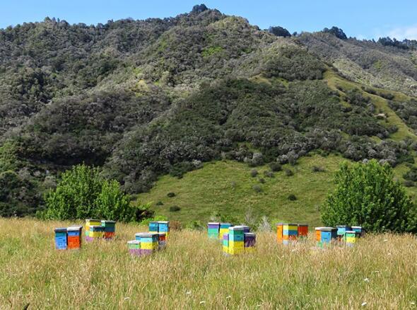 新西兰蜂蜜采集点——melita麦利卡蜂蜜UMF5+